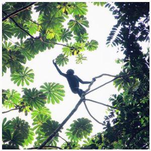 Bonobo Instagram 5