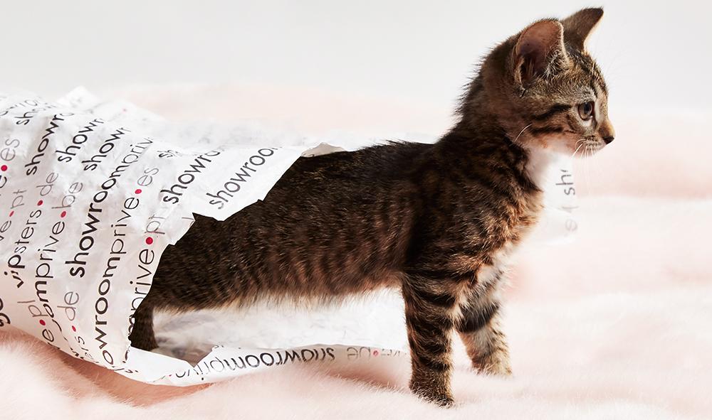 Journée du chat - showroomprive