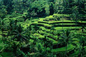 De la route des épices jusqu'aux Maldives